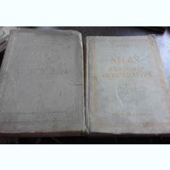 ATLAS DE ANATOMIE COMPARATIVA DE VASILE GHETIE, EUGEN PASTEA ,ILIE RIGA 1954 ,2 VOL