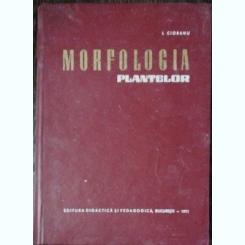 MORFOLOGIA PLANTELOR - I.CIOBANU