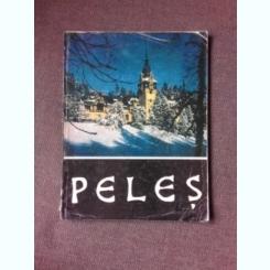 MUZEUL PELES, ALBUM